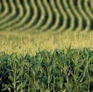 Atrazine herbicide