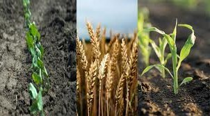 crop protection products