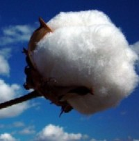cotton harvest aids