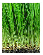 herbicide distributor