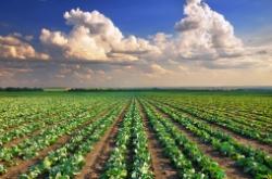 gramoxone inteon herbicide