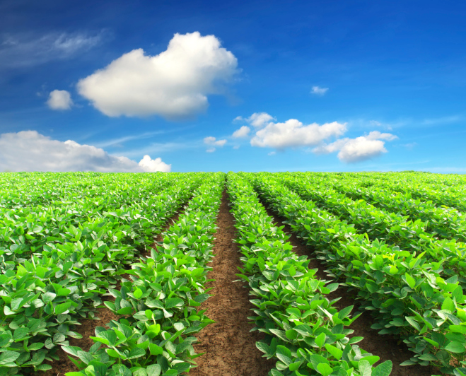 Using Agricultural Adjuvants to Slow Chemical Absorption